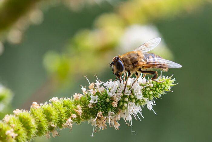 preservação da biodiversidade